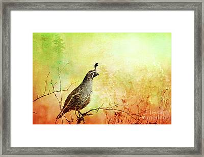 Its In The Air Framed Print by Beve Brown-Clark Photography