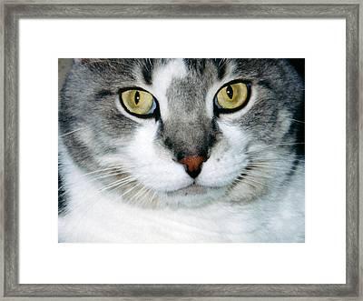 It's In The Cat Eyes Framed Print