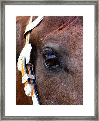 It's In The Eye Framed Print by Sabina Haas