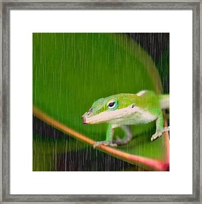 It's Just A Little Rain Framed Print