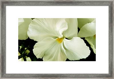 It's Just White Framed Print by Srinivasan Venkatarajan