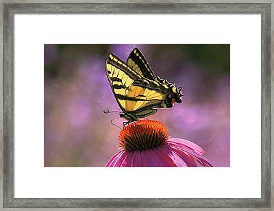 It's Lonely At The Top Framed Print by Donna Kennedy