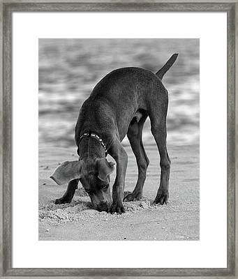 Its My Clam Framed Print by Angie Tirado