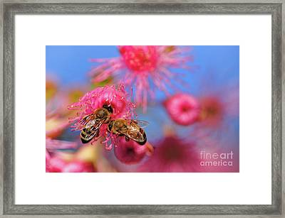 Its My Turn Now... Framed Print