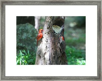 It's Nice To Share Framed Print by Carol Groenen