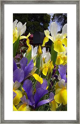 It's Not A Bud In The Middle Framed Print by Gail Salitui