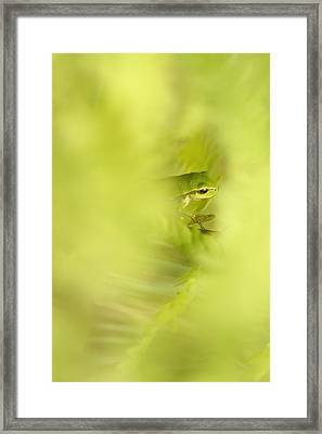 It's Not Easy Being Green - Tree Frog Hiding  Framed Print by Roeselien Raimond