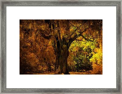 It's Not The Angel Oak Framed Print by Susanne Van Hulst