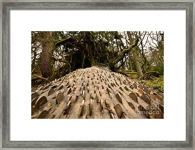 It's On The Money Framed Print by Nichola Denny