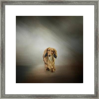 It's Showtime Baby - Dachshund Framed Print by Jai Johnson