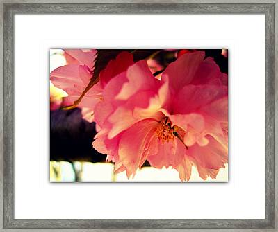 It's So Pink Framed Print by Jhoy E Meade