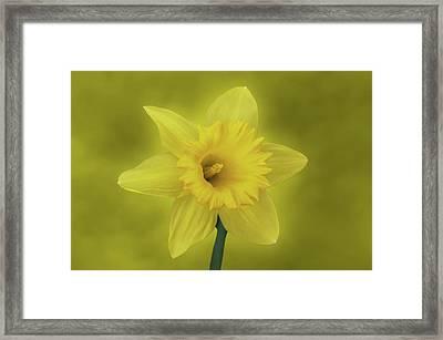 It's Spring Framed Print by Sandy Keeton