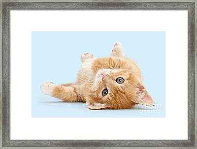 It's Sunday, I'm Feeling Lazy Framed Print