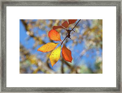 Framed Print featuring the photograph It's Time To Change by Linda Unger