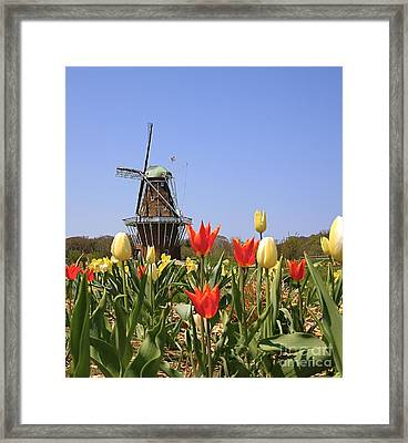 Its Tulip Time Framed Print by Robert Pearson
