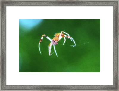 Itsy Bitsy Spider Framed Print by Bill Cannon