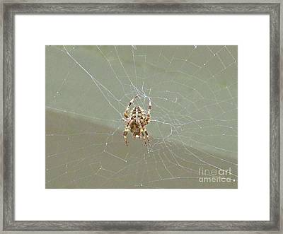 Itsy Bitsy Spider  Framed Print by Crystal Loppie
