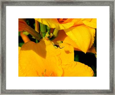 Itsy Bitsy Spider Framed Print by Susan Moore
