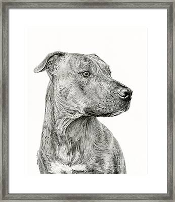Ittie Bittie Pittie Framed Print