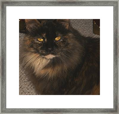 Itty-bitty 2008 Framed Print by Martin Morehead