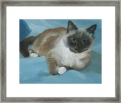Itty Bitty Kitty Framed Print by Audrie Sumner