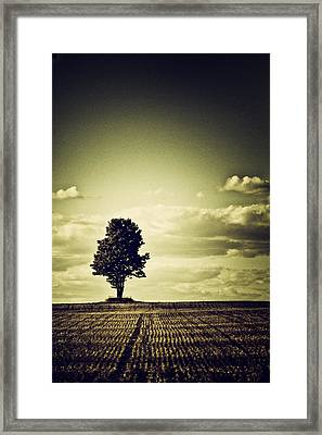 I've Been Watching...and...waiting.... Framed Print