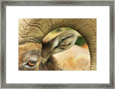 I've Got An Eye On You Framed Print