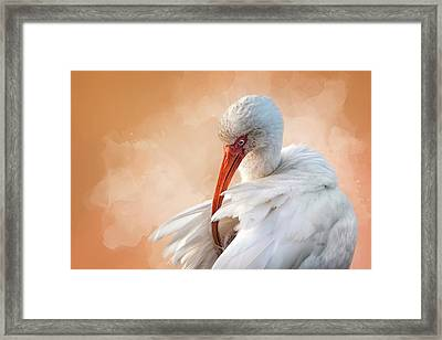 I've Got An Itch Framed Print