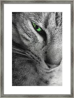 I've Got My Eye On You.  Framed Print