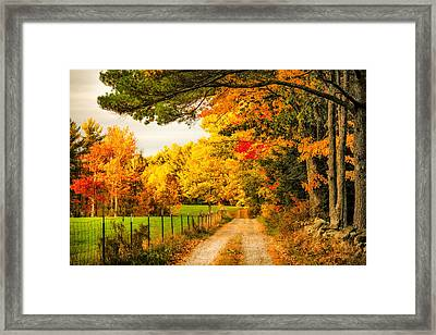 Framed Print featuring the photograph I've Got Sunshine On A Cloudy Day by Robert Clifford