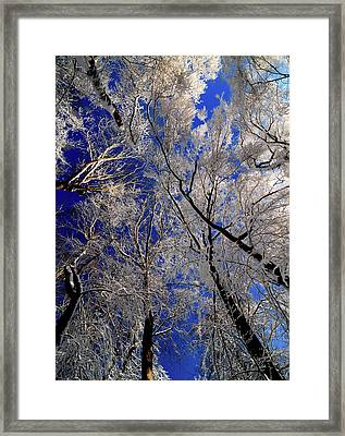 I've Heard Thee Framed Print by JCYoung MacroXscape