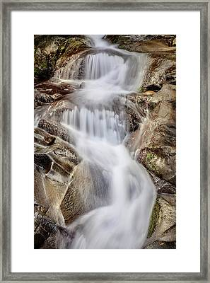 Ivory And Bronze  Framed Print by Az Jackson