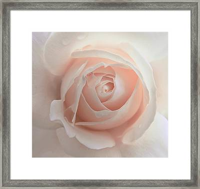 Ivory Peach Pastel Rose Flower Framed Print by Jennie Marie Schell