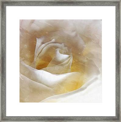 Framed Print featuring the photograph Ivory Rose - An Affair To Remember   by Janine Riley