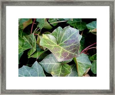Ivy Framed Print by Beth Akerman