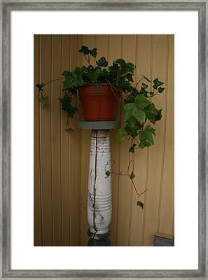 Ivy Corner Framed Print by Alan Rutherford