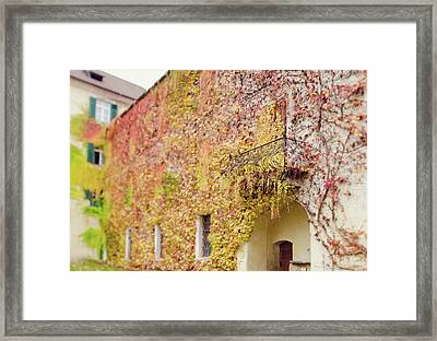 Ivy Covered Wall, Neustift Abbey, Bressanone Framed Print by Margaret Goodwin