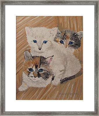 Ivy Iris And Dixie Framed Print by Sharon  De Vore