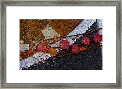 Ivy On Painted Wall Framed Print by Robert Ullmann
