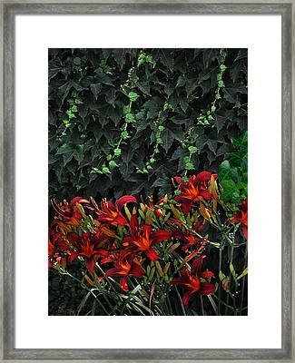 Ivy Over Framed Print by Richard Gordon