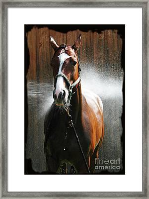 Framed Print featuring the photograph Ivys Shower by Deborah Johnson