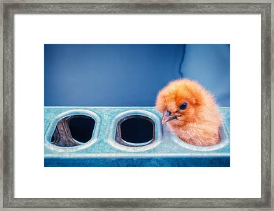 Iz In Da Feeder. Framed Print by TC Morgan