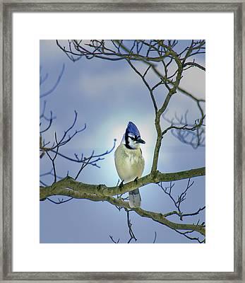 J Blue Framed Print by Kim
