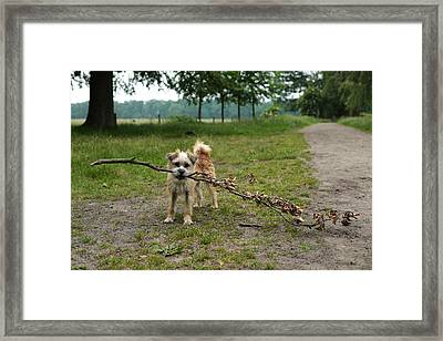 Dutch Dog With A Branch Framed Print by Rona Black