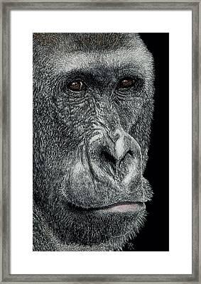 Jabari Framed Print