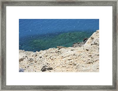 Jabba The Cypriot  Framed Print