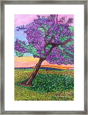 Jacaranda Bloom Framed Print by Ishy Christine Degyansky