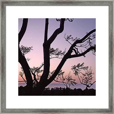Jacaranda Silhouette Framed Print by Rona Black
