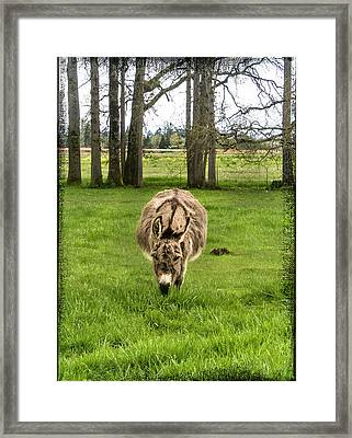 Jack Ass Confrontation Framed Print by Jean Noren