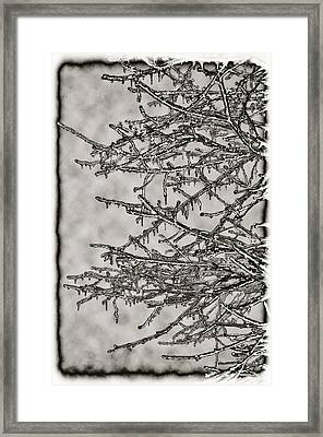 Jack Frost Framed Print by Bill Cannon